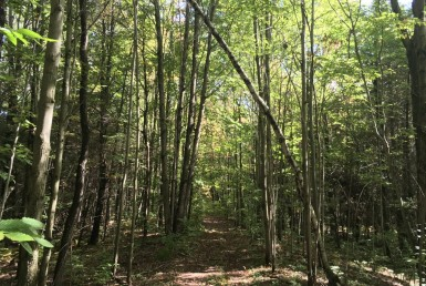 150 acres Timber and Hunting Land Madrid NY
