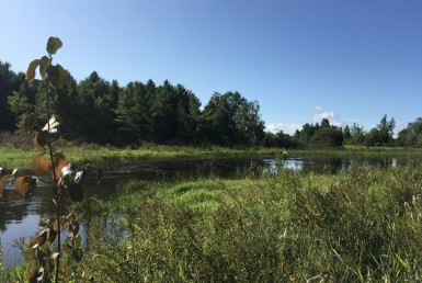 135 acres Hunting Land Dekalb NY