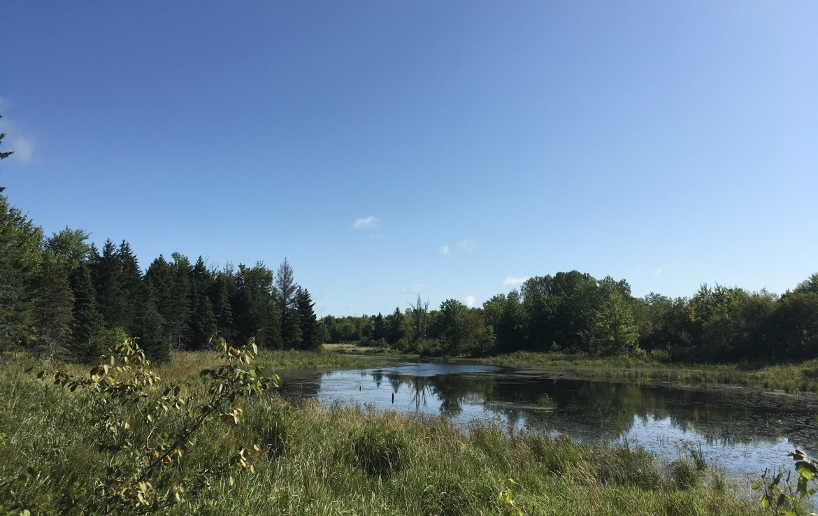 135 acres North Country Hunting Land for sale in St. Lawrence County!