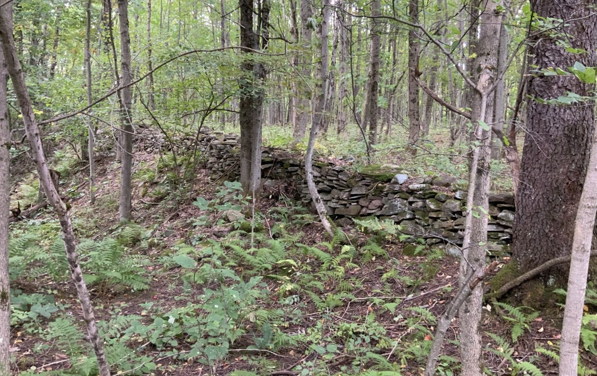 65 acres Tug Hill Hunting Land for sale with Wildlife Pond!