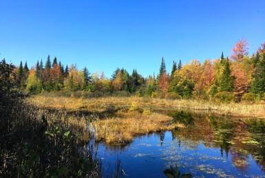 88 acres Adirondack Hunting Land Waverly NY