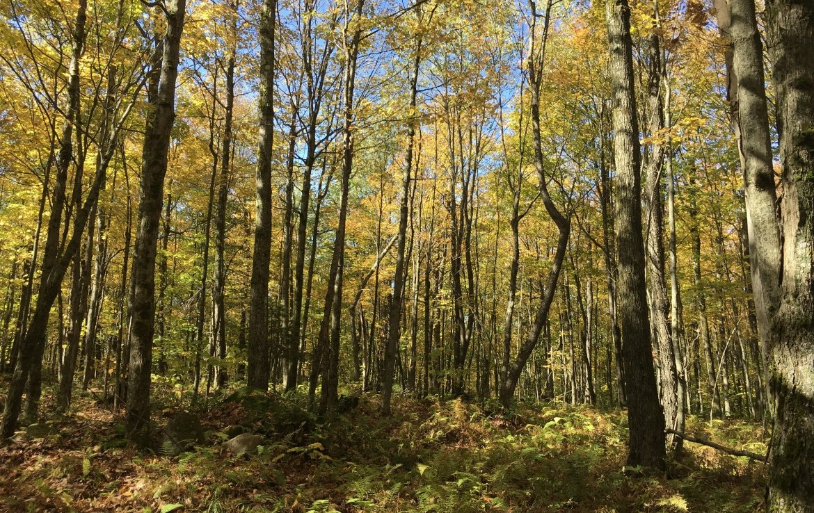 40 acres Bordering Deer River State Forest