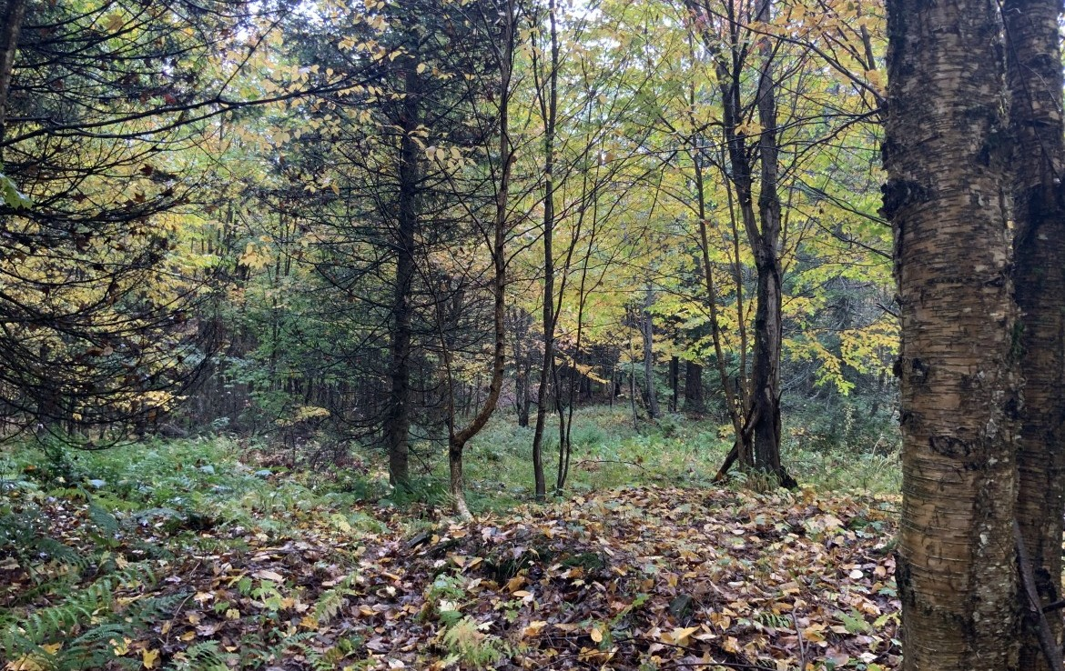 Borders Sears Pond State Forest (7,281 acres).