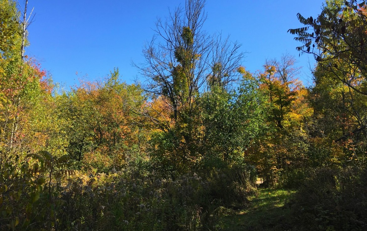 heavily wooded and offers the potential for future timber harvest.