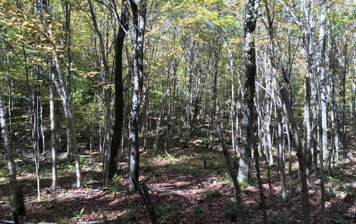Adirondack property bordering state land