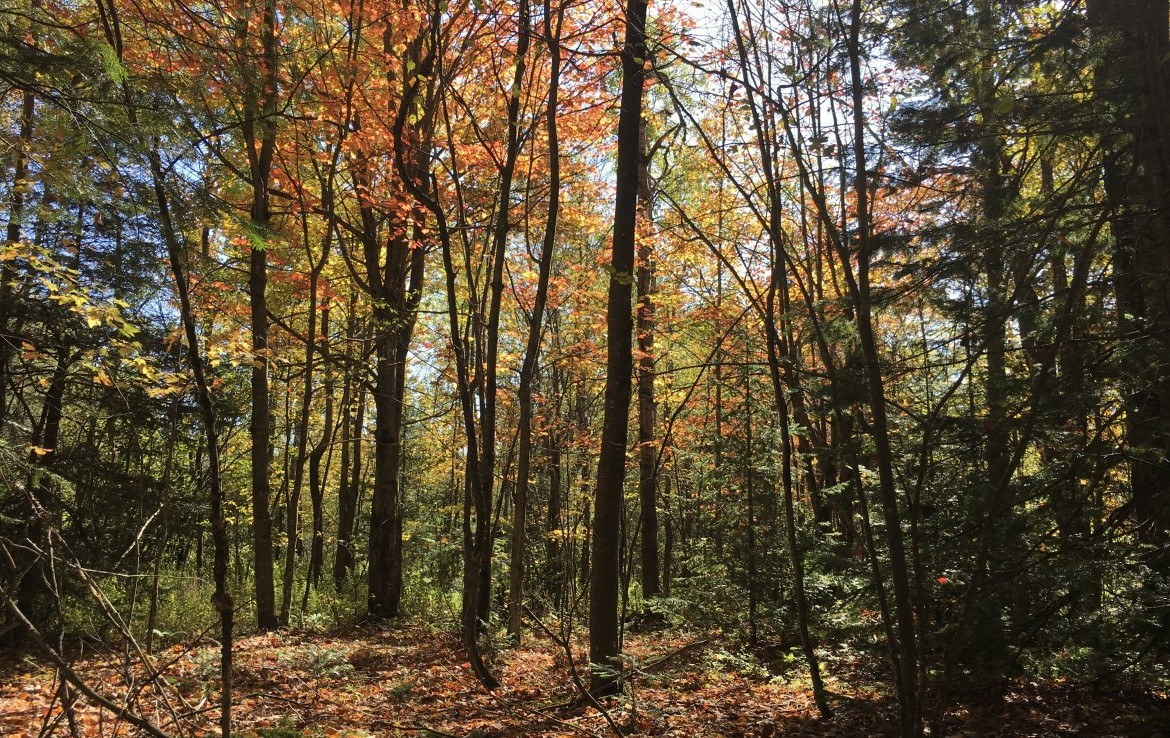 88 acres Northern Adirondack Hunting Land for Sale in Waverly, NY!