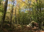 40 acres Adirondack Recreational Land for sale Brandon, NY!
