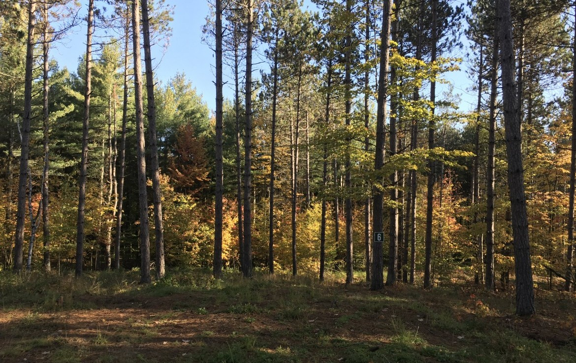 5 acre Adirondack Property in Malone NY!
