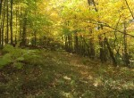 1,839 acre Taylor Creek state forest is 1 mile away