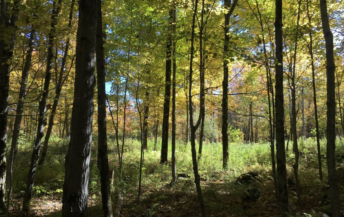 The area is known for its healthy populations of deer, bear, and small game animals.