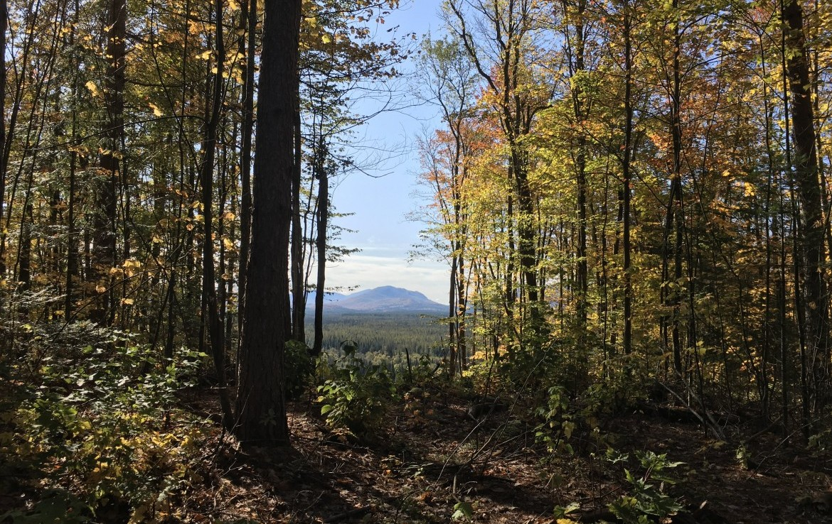 8.5 acres Bordering State Land with Adirondack Mountain Views!