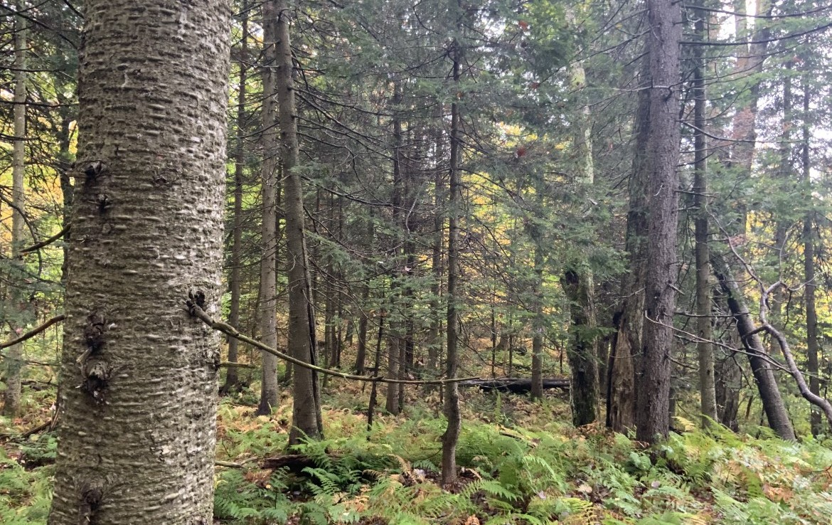 720 feet of frontage along State Forest along Sears Pond Sate Forest (7,281 acres).