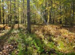91.3 acres Hunting Land and Beautiful Timberland for sale in Addison, NY!