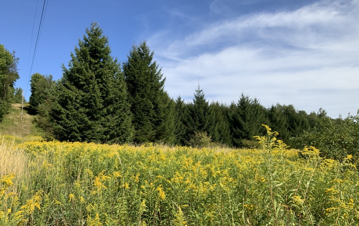 11 acres Hunting land for sale with electric available!