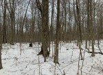 Pristine Woodlands bordering Adirondack State Forest in Fulton County!