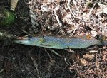 Fishing Property with ATV Trails for sale in Williamstown, NY!
