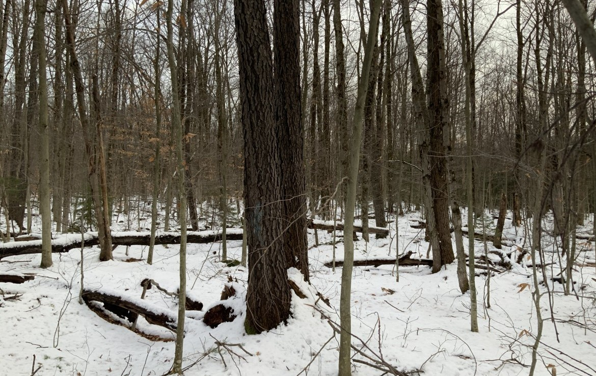 All of the land is wooded; consisting of maple, cherry yellow birch.
