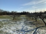 Corner property with LargeVegetable Garden and Apple Trees!
