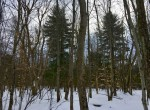 18 acres Hunting and Building lot Moira NY