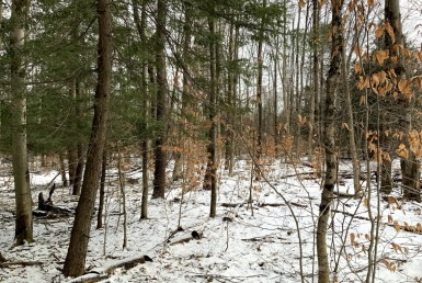 5 acre, woodland building site, Williamstown, NY!