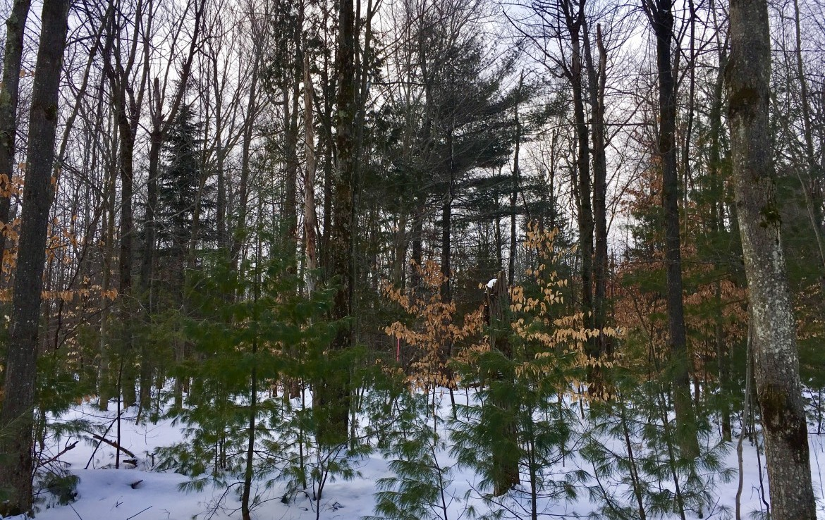 18 acres Wooded Hunting Land for Sale Moira NY!