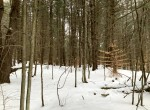 14 acre Wooded Hunting Land Amboy NY