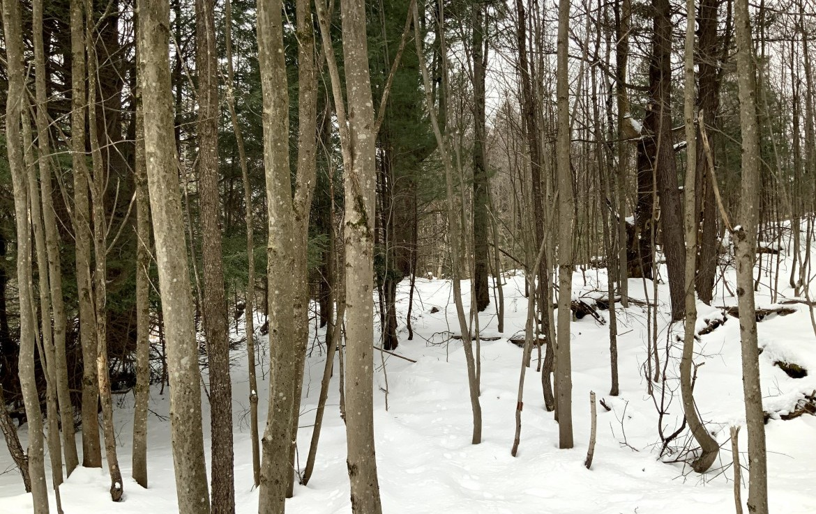 14.26 acres Hunting Land for Sale, Amboy, NY!