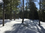 5 acres Hunting Land for sale in Owls Head, NY!