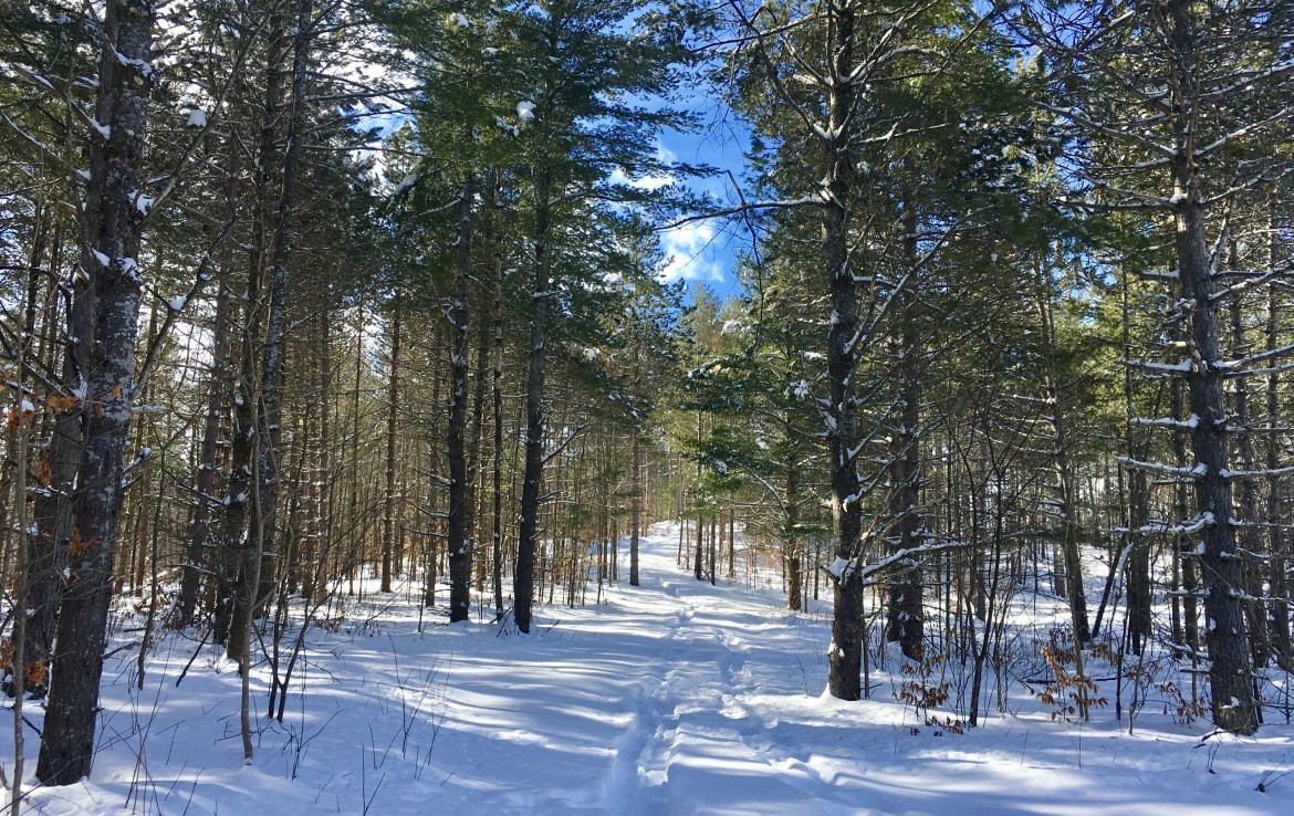 Beautiful Getaway or Homestead Site with Meadow and Forested Views!