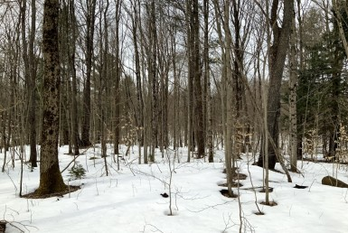 19 acres Near Salmon River On ATV Trail Williamstown NY