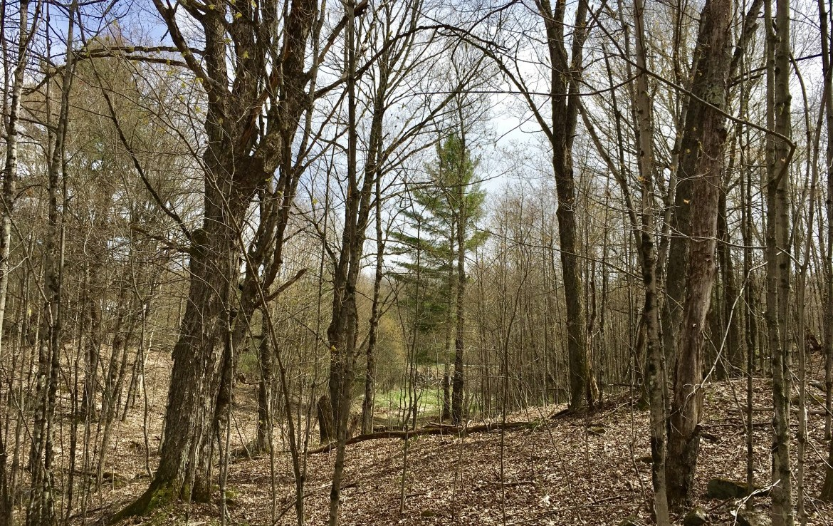 Hunting Land with Camper Pad for sale in Lewis County!