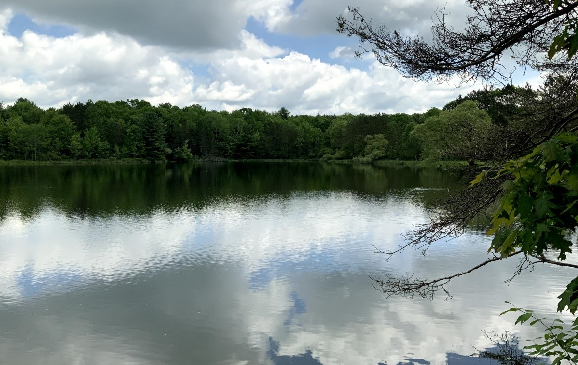 158 acre Land for Sale with 7 acre Deep Water Pond, Tioga, NY!