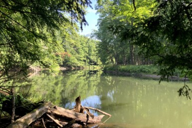 5 acres Remote Woodlands Along Fish Creek Vienna NY