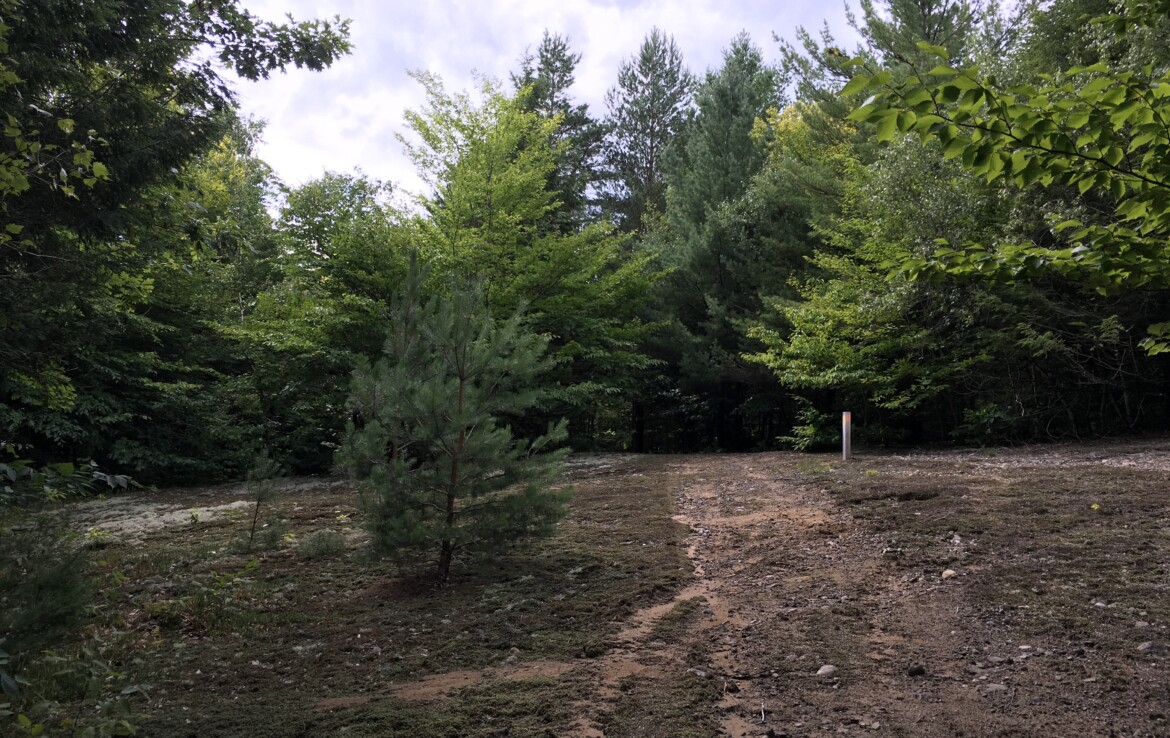 Great Wooded Camp Lot With Trails, Survey, and Power!