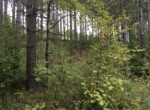 7 Acre Wooded Building Lot Russell NY