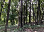 177 acres Land for Sale Bordering Charles E. Baker State Forest, Columbus, NY!