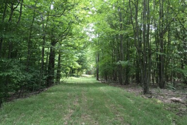 116 Acres Hunting Land for sale Pierrpont NY