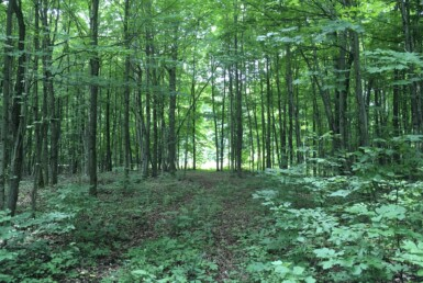 105 acres St. Lawrence County Hunting Land De Kalb NY