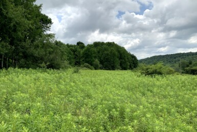 44 acre Chenango County Deer Hunting Land Norwich NY
