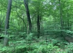 17.5 acres Hunting Land Bordering State Forest Amboy NY