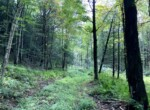52.5 acres Hunting and Country Home Site Cuyler NY
