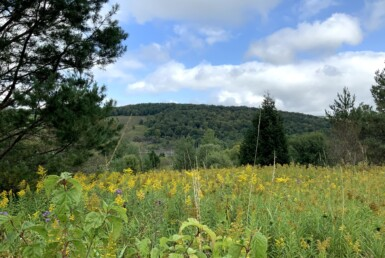 7.14 acre Country Home and Cabin Site Cuyler NY